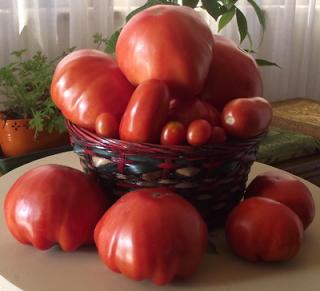 Virtù dei pomodori e ricette light sul tema