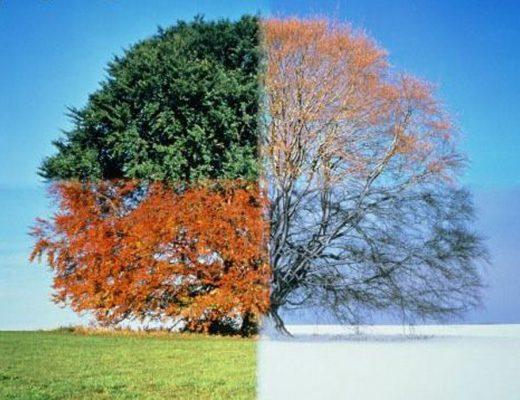 Cinque alimenti utili per il cambio di stagione