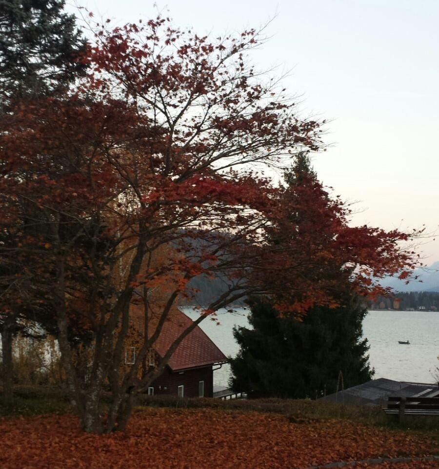 autunno-difese-immunitarie